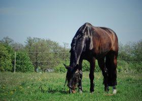 Pferd4-1